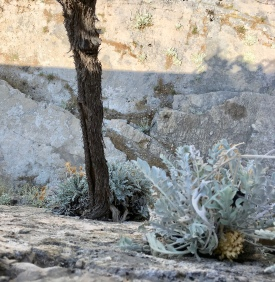 I looked down over the wall in the Pustinja Blaca monastery to see the vine growing out of it.