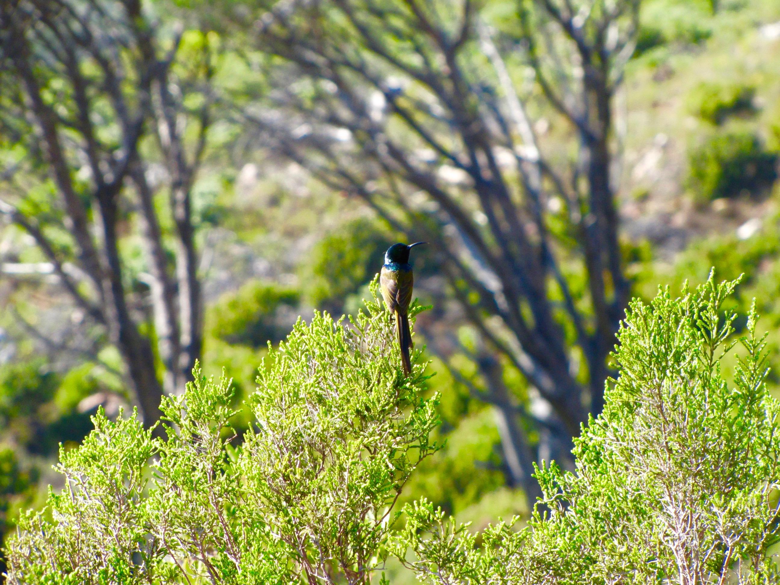 Climbing Table Mountain - 1 of 32 (20)