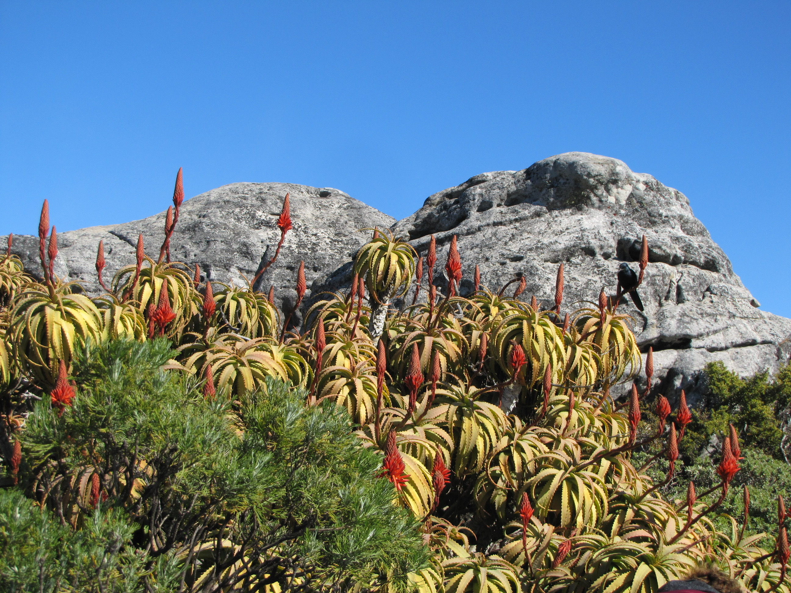 Climbing Table Mountain - 1 of 32 (26)