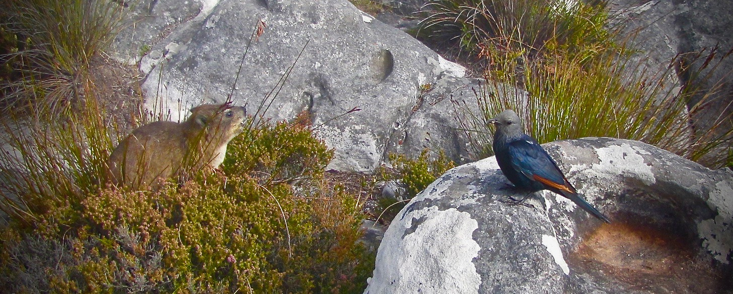 Birds South Africa